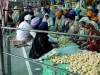 Food for worshipers at the Golden Temple