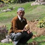 Kashmiri-Lal with a Basunti garden potato