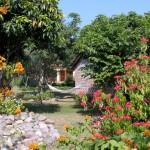 Poinsettia & Bougainvillea, November 2012
