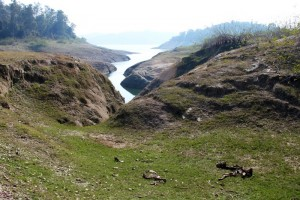 Cow gully, Basunti