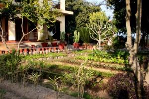 Our veg garden, January 2013