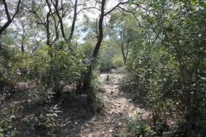Goat Trail, Basunti