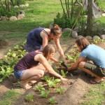gardening, Basnti